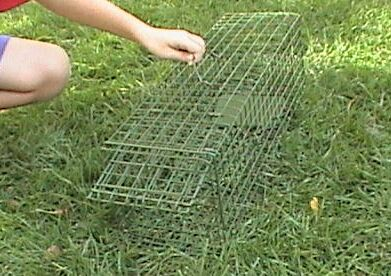 rabbit snares traps how to make