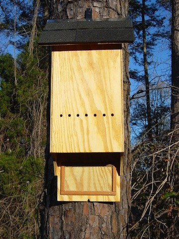 MEDIUM BAT HOUSE LIGHT
